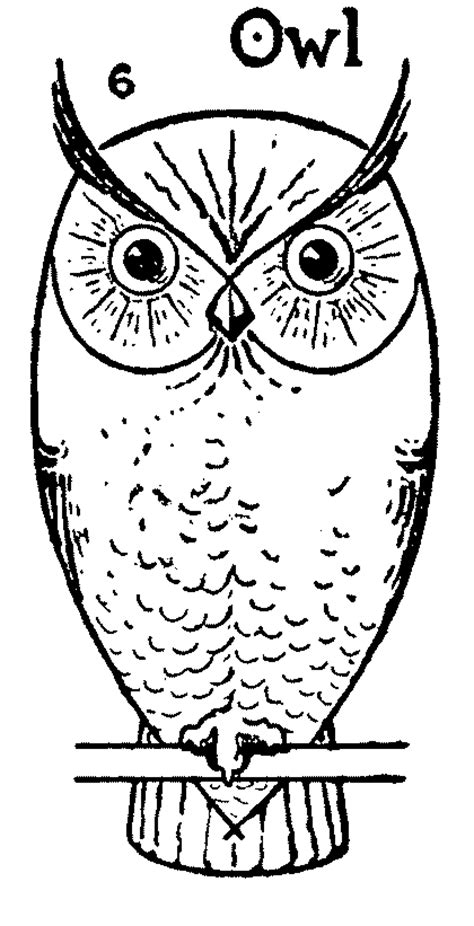 How to draw an Owl step by step - Simple Owl drawing